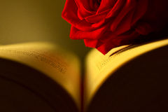 Red rose in a book Royalty Free Stock Images