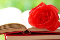 Red rose on book Stock Photos