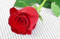 Red rose and book, for Saint Georges Day in Catalonia, Spain Stock Photography