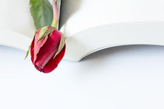 Red Rose Book. Red rose on a book under white table Royalty Free Stock Photo