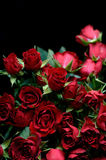 Red Rose Boquet. Boquet of several small red roses against a black background stock photo