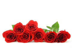 Red rose border Stock Image