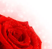 Red rose border Royalty Free Stock Image