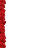 Red rose border. With white space for copy Stock Image