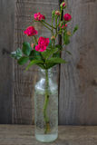 Red Rose in a bottle. On gray background Stock Image