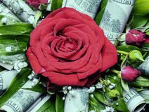 Red rose in bouquet decorated with hundred dollars Royalty Free Stock Images