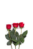 Red rose bouquet flower isolated on white clipping path included Stock Images