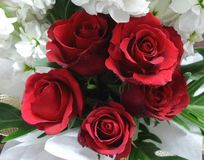 Red rose bouquet Stock Photos