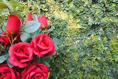 Red rose bouquet for Valentine day Royalty Free Stock Photography