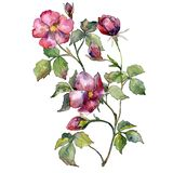 Red rose bouquet. Watercolor background illustration set. Watercolour isolated bouquet illustration element. Red rose bouquet. Watercolor background stock illustration