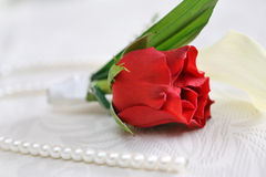 Red rose boutonniere for the groom. With pearls on the table Stock Photos