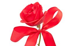 Red rose with bow Stock Images