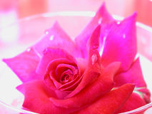 Red rose in a bowl. A red rose in a bowl of fresh water Stock Image