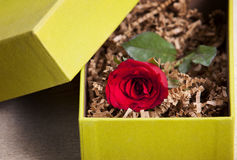 Red rose in box. Red rose in the gift bon on wood table Royalty Free Stock Image