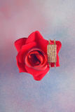 Red rose with bracelet Royalty Free Stock Image