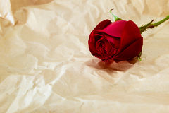 Red rose on brown crumpled paper Royalty Free Stock Photography