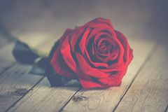 Red Rose on Brown Wooden Surface Royalty Free Stock Photography