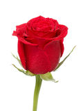 Red Rose Bud Royalty Free Stock Image