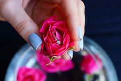 Red rose bud with gold ring in girl hand. Red rose bud with gold wedding ring in the fingers of the girl`s hand royalty free stock photos