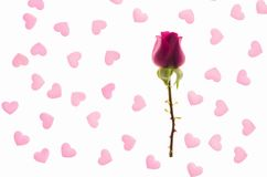 Red rose bud in a pink hearts background Stock Images