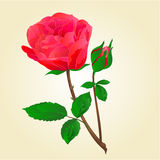 Red rose with bud vector. Twig Red rose stem with leaves and bud vector illustration Stock Image