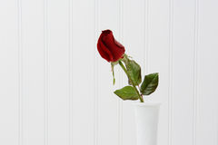 Red Rose Bud on White Royalty Free Stock Images