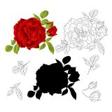 Red Rose with buds and leaves natural and outline and silhouette vintage  Festive background vector illustration editable. Hand draw Royalty Free Stock Photography