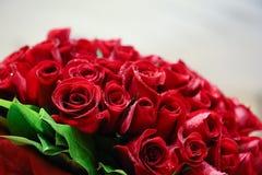 Red Rose Bundle stock photos