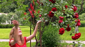Red rose bush. Pregnant happy woman throw rose petals in garden Royalty Free Stock Image