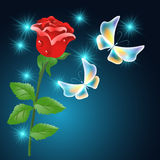 Red rose and butterflies Stock Image