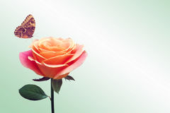 Red rose and butterfly. Red rose and flying butterfly royalty free stock photos