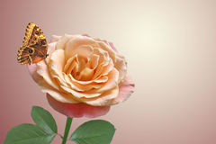 Red rose and butterfly. Red rose and flying butterfly stock images