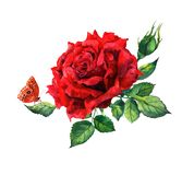 Red rose, butterfly. Watercolor flower - botanical illustration. Red rose and butterfly. Watercolor flower - botanical illustration vector illustration
