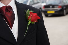 Red rose button hole flower. Red rose pinned as a button hole on the lapel of a grooms Jacket Stock Image