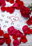 Red rose on calendar Royalty Free Stock Image