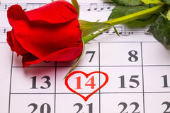 Red rose on calendar Royalty Free Stock Photography