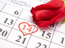 Red rose on calendar Stock Images