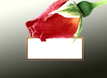 Red rose card Royalty Free Stock Photos
