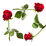 Red rose card Stock Photo