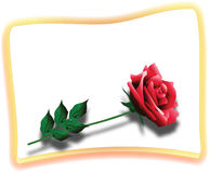 Red Rose Card. Illustration of card with the detailed red rose Royalty Free Stock Images