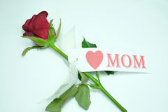 Red rose. With card  love mom white background Royalty Free Stock Photography