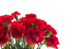 Red rose and carnation isolated on white background royalty free stock image