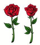 Red rose cartoon Royalty Free Stock Image