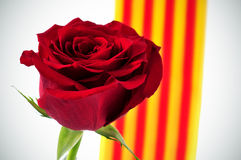 Red rose and Catalan flag for Saint Georges Day Stock Image