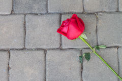 Red rose on cement floor Stock Photos