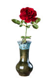 Red rose in a ceramic vase, isolate on a white background, close Stock Photos