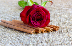 Red rose with cinnamon, coffee beans Royalty Free Stock Images