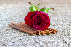 Red rose with cinnamon, coffee beans Royalty Free Stock Photos