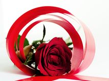 Red rose circle stock photography