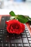 Red rose close up Stock Photos